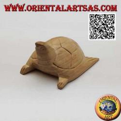 Caretta sea turtle in 7 cm...