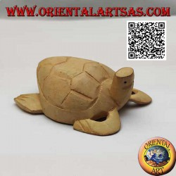 Loggerhead sea turtle with...