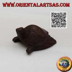 Caretta sea turtle in 5 cm...