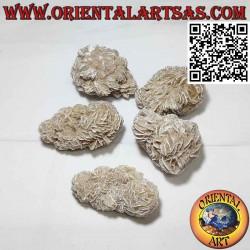 Desert Rose (40 g → 50 g)