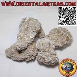 Desert Rose (80 g → 100 g)